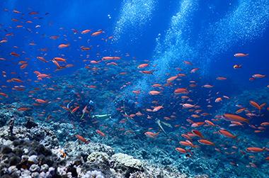 宮古島海洋散骨の魅力 IMAGE02(ミヤコブルーの海 海底  画像)