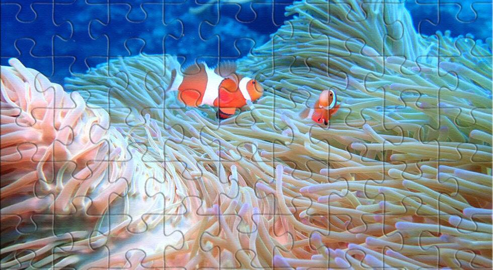 海洋散骨 宮古島