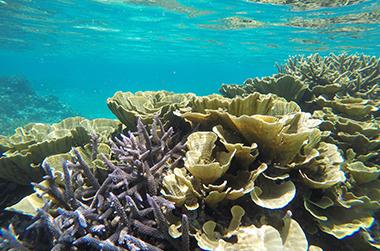 宮古島のサンゴの海 IMAGE